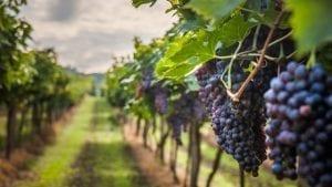 Wijn van de maand maart | Wijnspecialist