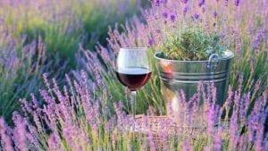 Heerlijke wijn voor in de lente | Wijnspecialist
