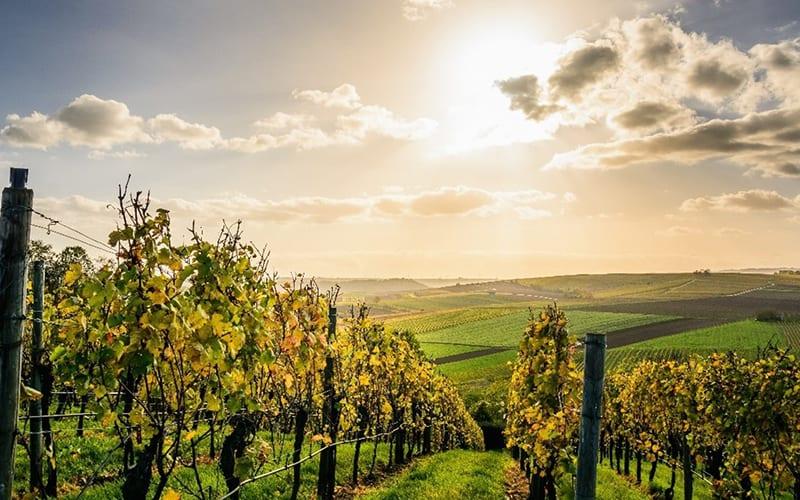 's Werelds grootste wijnlanden | Blog | Wijnspecialist